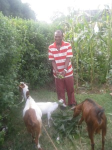 Dana og geitene