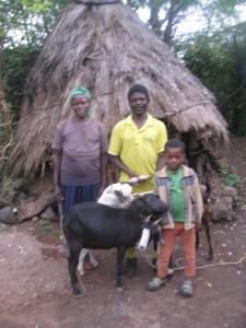 Sisay og geitene
